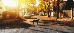 A dog walking across the street.
