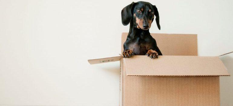 a dog inside a cardboard box