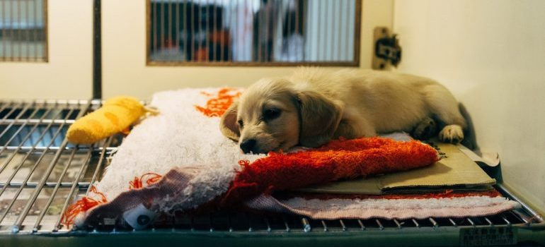 A puppy in a cage at a veterinarian
