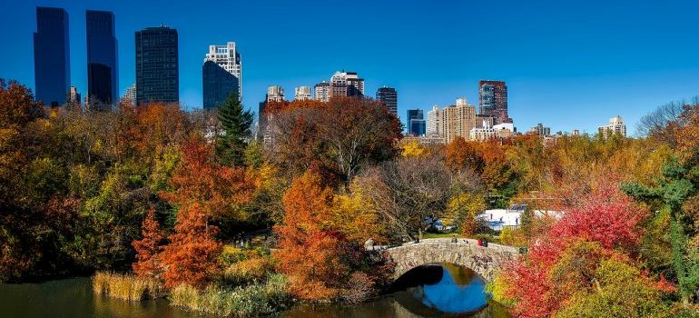 adapt to the NYC lifestyle after a move, Central Park