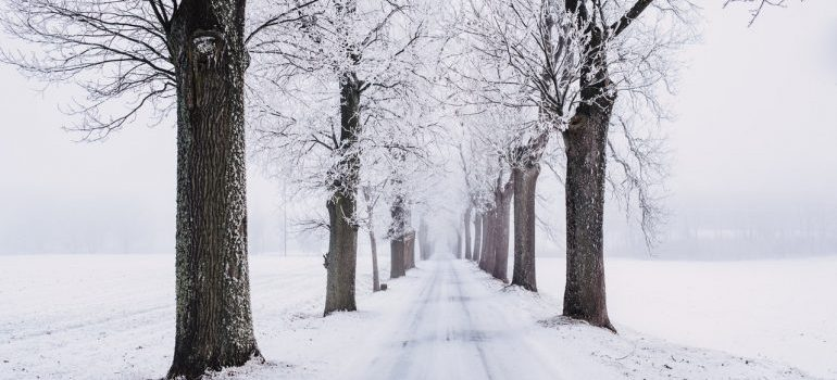 A snow-covered road with trees on the side.