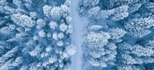 A forest road flanked with trees during the winter, representing safety measures for winter relocations.