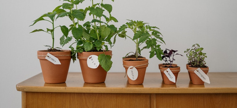 There are five plants on one wooden table.