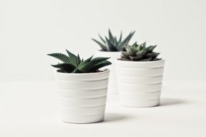 Learn how to prepare and pack plants for moving to Bergen County with our guide.