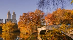 NYC in the fall.